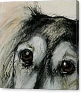 Sophia's Eyes Canvas Print