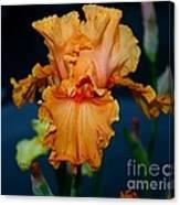 Soprano Iris Canvas Print