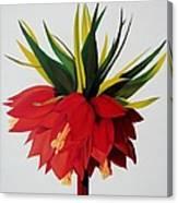 Sotogrande Canvas Print