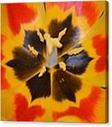 Soul Of A Tulip Canvas Print