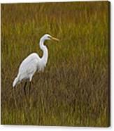 Soundside Park Topsail Island Egret Canvas Print