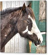 South Barrington Horse Canvas Print