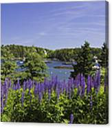 South Bristol And Lupine Flowers On The Coast Of Maine Canvas Print
