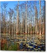 South Carolina Swamps Canvas Print