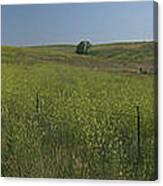 South Dakota Homestead Canvas Print