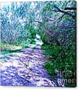 South Texas Brushlands Canvas Print