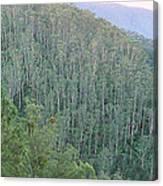 Southeast Forest Ridges Canvas Print