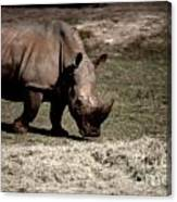 Southern Black Rhino Canvas Print