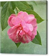Southern Camellia Flower Canvas Print