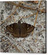 Southern Cloudywing Canvas Print