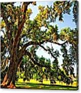 Southern Comfort Painted Canvas Print