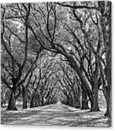 Southern Journey Bw Canvas Print