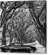 Southern Muscle Canvas Print