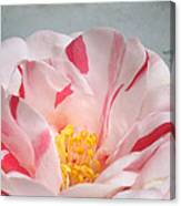 Southern Peppermint Beauty Canvas Print
