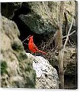 Southern Red Bird By The Flint River Canvas Print