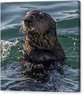 Southern Sea Otter 2 Canvas Print