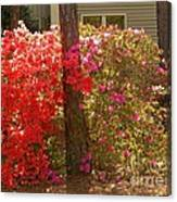 Southern Spring Color Canvas Print