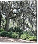 Southern Trees Canvas Print