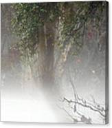 Southern Trees Have Curves Canvas Print