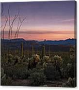 Southwest Serenity  Canvas Print