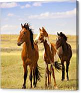 Southwest Wild Horses On Navajo Indian Reservation Canvas Print