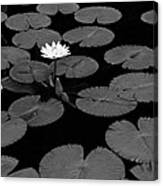 Space Lily Canvas Print