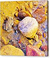 Spadefoot Toad Near Stones On Capitol Gorge Pioneer Trail In Capitol Reef National Park-utah Canvas Print