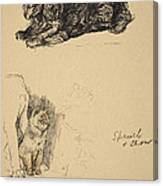 Spaniel And Chow, 1930, Illustrations Canvas Print