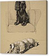 Spaniel And Sealyham, 1930 Canvas Print