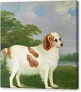 Spaniel In A Landscape Canvas Print