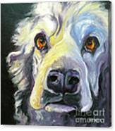 Spaniel In Thought Canvas Print