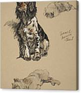 Spaniel, Pekinese And Chow, 1930 Canvas Print