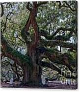 Spanish Moss Draped Limbs Canvas Print