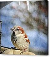 Sparrow 5   Canvas Print