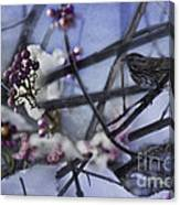Sparrow And The Beauty Berry Canvas Print