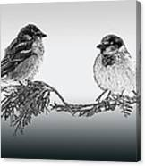 Sparrow Digital Art Canvas Print