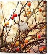 Sparrow In A Crab Apple Tree Canvas Print