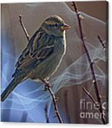 Sparrow In A Weave Canvas Print