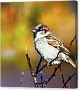 Sparrow In The Park Canvas Print