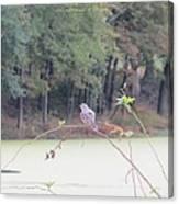 Sparrow On Arc Canvas Print