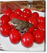 Sparrow On Red Eggs Canvas Print