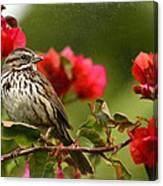 Sparrow Song 8 Canvas Print