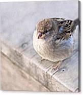 Sparrow - Takeoff Problems Canvas Print