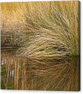 Spartina Grass  Canvas Print
