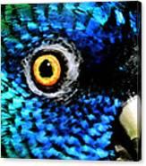 Speaking Eye  Canvas Print