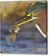 Speared Canvas Print