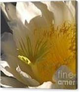 Spectacular Dragon Fruit Bloom Canvas Print