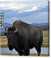 Speedy Bison In Yellowstone National Park Canvas Print