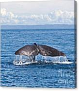 Sperm Whale Tail  Physeter Catodon Canvas Print
