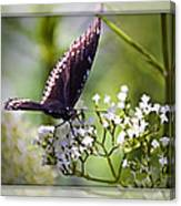 Spicebrush Swallowtail Butterfly Canvas Print